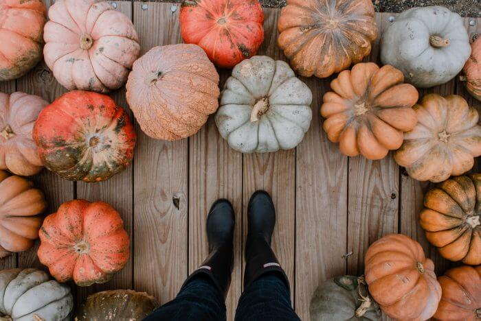 Halloween pumpkins and gourds sustainable