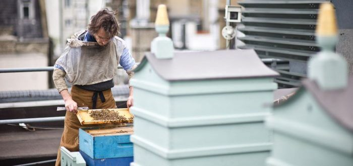 fortnum & mason rooftop bees